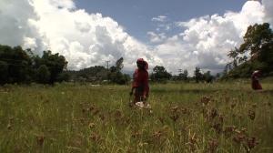 Bindu-Field-Image